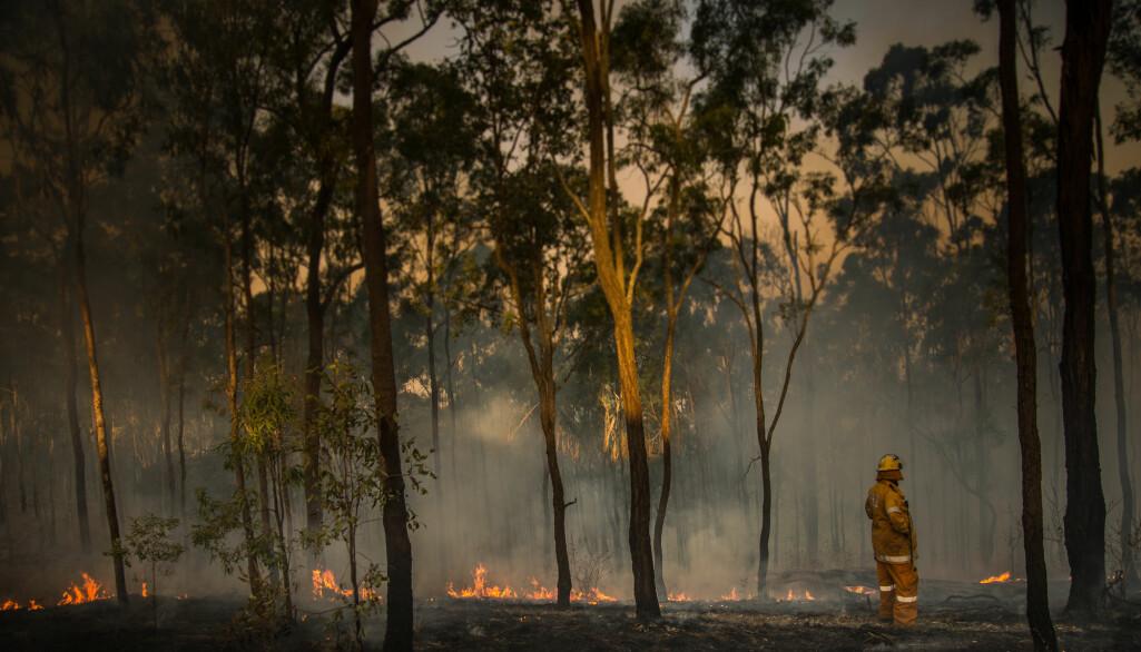 Brannene i Australia får katastrofale følger for dyr og planter i landet. Sannsynligvis gjenstår ennå det verste.