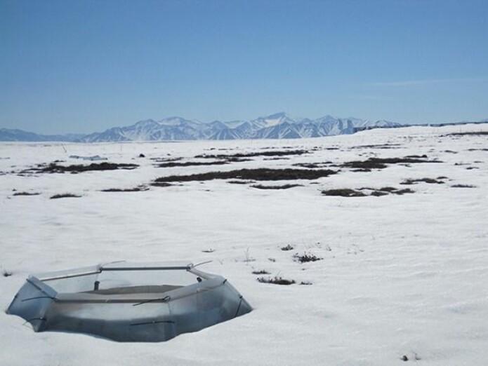 Forskerne varmet opp tundraen ved hjelp av små, åpne drivhus der edderkoppene bodde.