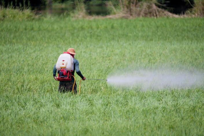 En bonde på Sri Lanka sprøyter jordene sine. (Foto: Colourbox)