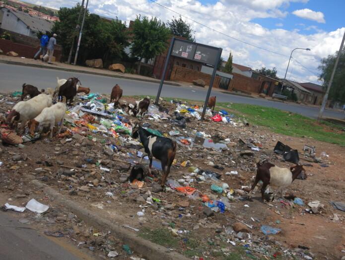 Urbane bygeiter er det lite av i de forstedene jeg gjør feltarbeid. Her i Soweto er det et vanlig syn.