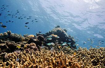 Ocean acidification a big problem — but not for coral reef fish behaviour