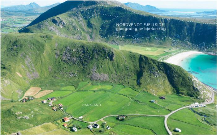 I fjellsidene på yttersidenebygdene som Haukland og Vik kan fjellsidene gro igjen om beitetrykket blir for lavt. I den nordvendte fjellsiden på Vik er gjengroingen med bjørkekratt allerede i gang.