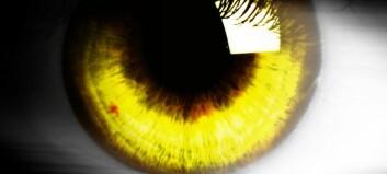 Hvorfor finnes det ikke mennesker med gule øyne?
