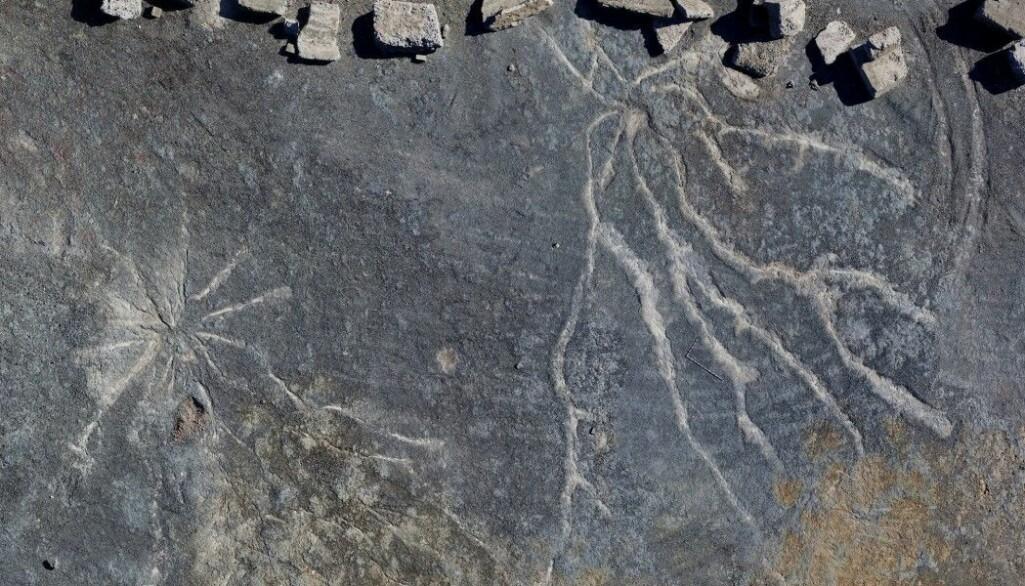 Dette er avtrykk etter røtter fra trær som levde for hele 385 millioner år siden.