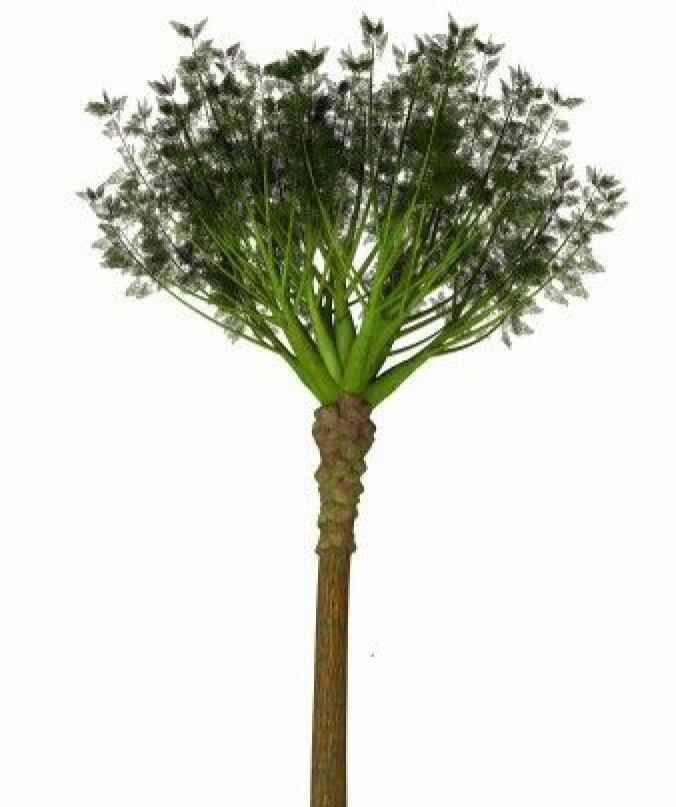 """""""Eospermatopteris"""" hadde naken stamme med greiner på toppen. Den kan se litt ut som en palme."""