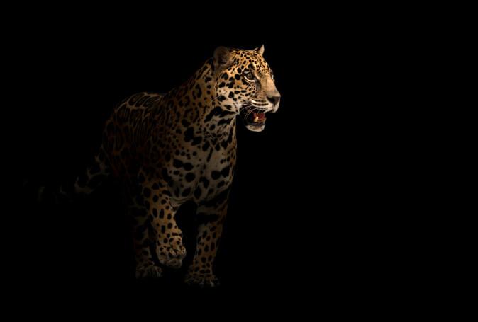 I dag er det ikke mange farlige dyr i naturen, men i steinalderen kunne det være risikabelt å begi seg ut om natten.