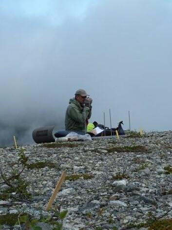 I tidsrommet 2008–2010 ble vegetasjonssammensetningen på 19 steintipper og omgivelsene til disse undersøkt. Alle steintippene ligger på Vestlandet. (Foto: Knut Rydgren)