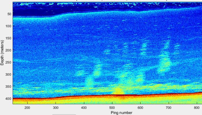 Observasjon i august: Metangassen slippes ut som bobler som kan observeres som glimt på ekkoloddet.