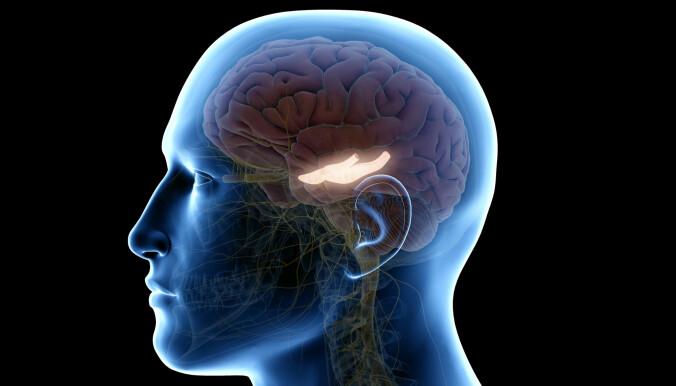 Den biten av hjernen som lyser kalles for hippocampus. Det betyr sjøhest. Der setter hjernen sammen minnene våre.