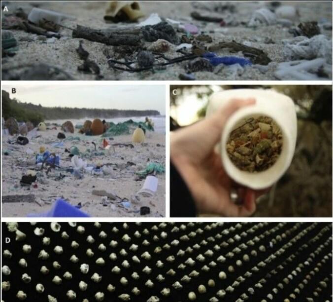 På bildet til høyre ser du flasken som inneholdt 526 sneglehus. På bildet nederst er de lagt ved siden av hverandre.
