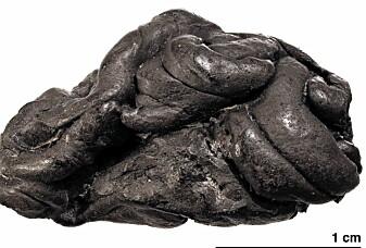 Dette er tyggisen til ei jente som levde for flere tusen år siden