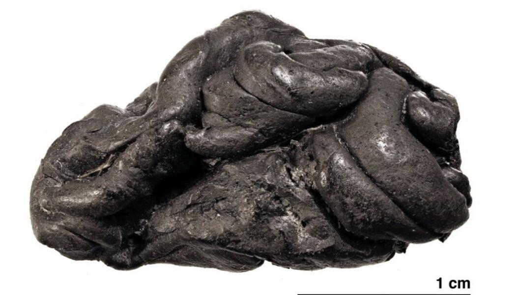 En klump med kvae fra Danmark viste seg å ha DNA i seg fra ei jente fra steinalderen.