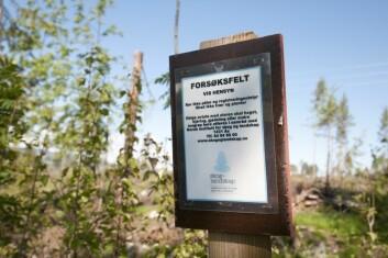 Prosjektet Ecobrem undersøker konsekvensene av økt uttak av bioenergivirke fra hogstfelt. (Foto: Lars Sandved Dalen)
