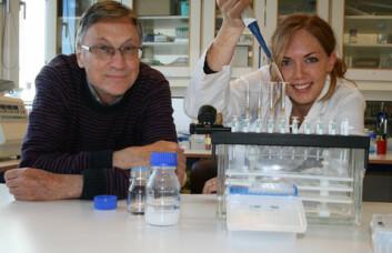 Seniorforsker Gunnar Bengtsson og postdoktor Sidsel Fiskaa Hagen undersøker brokkoliekstrakter. (Foto: Norunn K. Torheim)