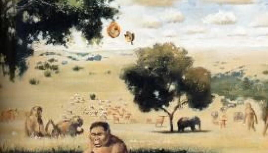 Slik ser en kunstner for seg livet på savannen for rundt en million år siden. Kanskje var han som skjærer kjøtt i venstre kant av bildet i sving langt tidligere enn som så. (Illustrasjon: Walter Voigt/Wikimedia Creative Commons)