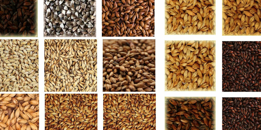 Beer can be made from many grains.