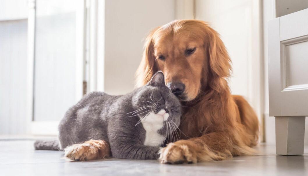 Mange tror at katter og hunder ikke kan være venner.