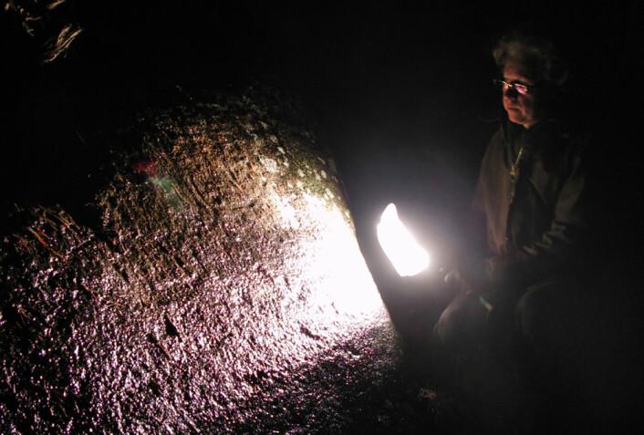 David Vogt oppdager en helleristning på Solberg i Skjeberg, Østfold (Foto: Arnfinn Christensen)
