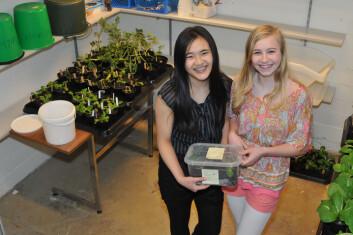 Winnie Zhao og Mariell Verningsen fra 8A på Holtan ungdomsskole synes det har vært spennende å få prøve seg som forskere. (Foto: Morten Günther)
