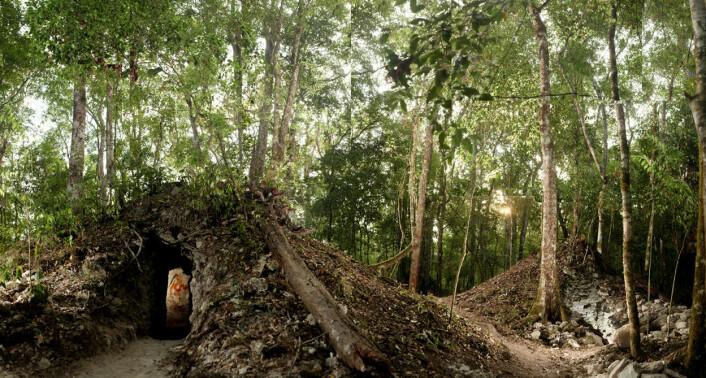 Haugen dekker et lite hus med veggmalerier fra 800-tallet. Huset står i utkanten av restene etter Xultún, en by som en gang hadde titusener av innbyggere. (Foto: Tyrone Turner 2012 National Geographic)