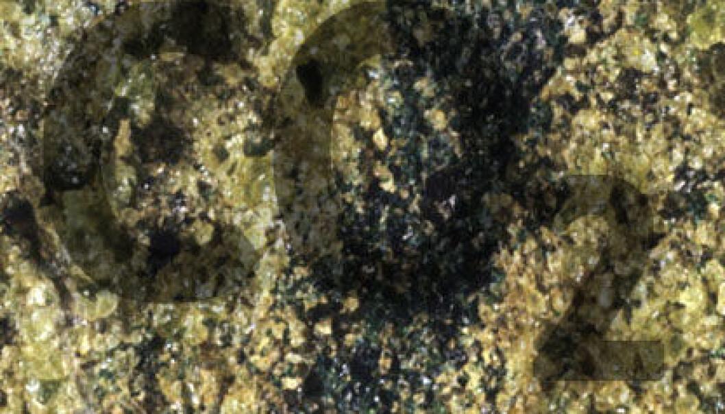 Peridotitt (Illustrasjonsbilde: Omphacite, Wikimedia Commons)