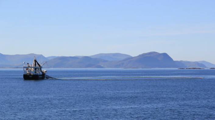 Fiske i norske farvann kan bli rikere takket varmere hav. (Foto: Colourbox.no)