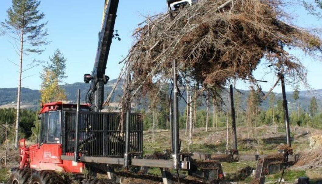 Grothauger fjernes tidlig på høsten. Kjersti Holt Hanssen