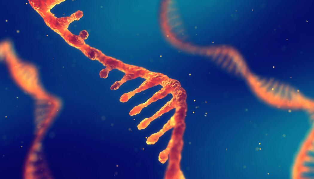 RNA er blitt et hett tema, for eksempel innen kreftforskning.