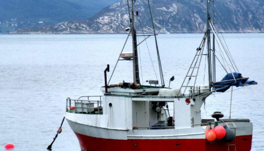 Et surere hav påvirker særlig de bittesmå dyra langt nede på næringskjeden. iStockphoto