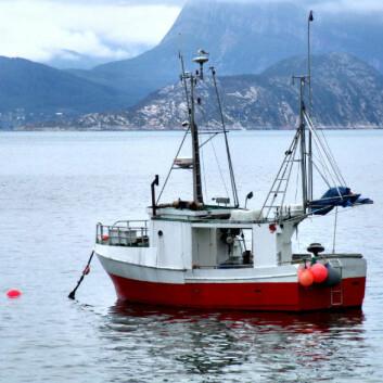 Et surere hav påvirker særlig de bittesmå dyra langt nede på næringskjeden. (Foto: iStockphoto)