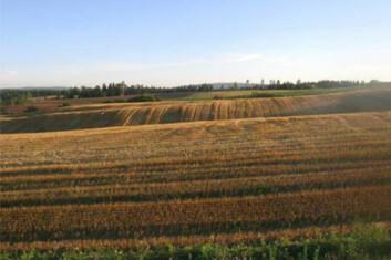- Gjør om grasareal til kornareal i områder der forholdene ligger til rette for det, sier seniorforsker ved Bioforsk, Arne Grønlund. (Foto: Bioforsk)