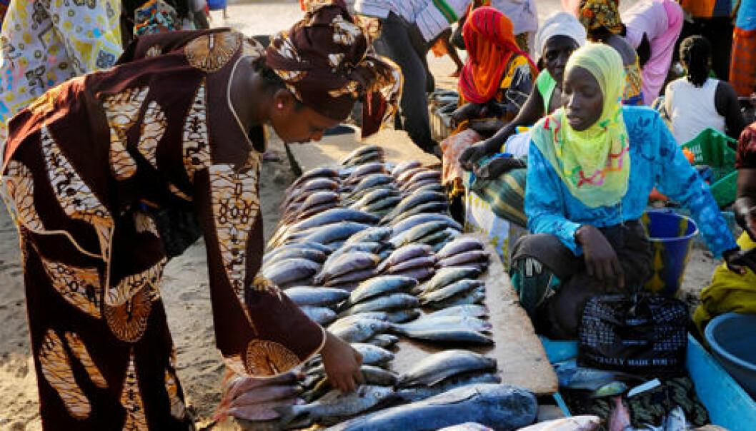 Fiskerlandsby i Gambia. iStockphoto