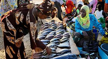 Klimaendring påvirker globale fiskefangster
