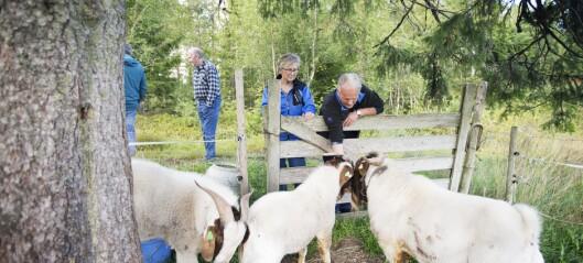 Utstilling om demensomsorg på gård