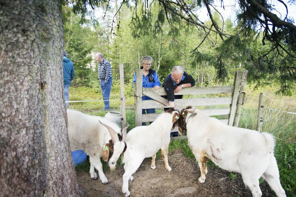 Forskning viser at dagaktiviteter på gård bidrar med gode dager for personer med demens. Se utstilling på NMBU fra 27. januar.