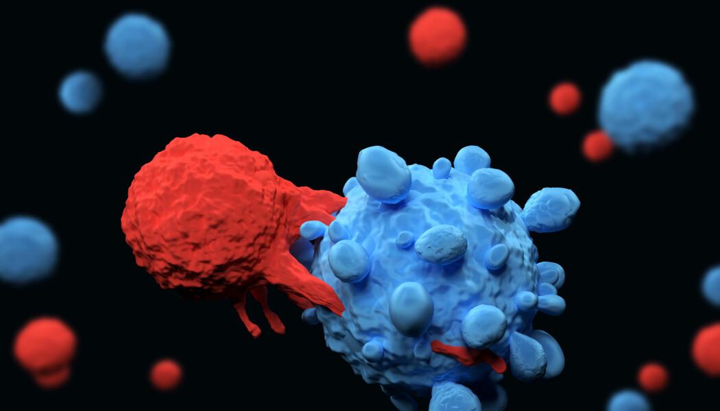 T-cellen er en effektiv soldat i kampen mot inntrengere som gjør oss syke. Den brukes mye i immunterapi mot kreft. Nå har forskere funnet en ekstra effektiv T-celle som kjenner igjen mange ulike kreftceller.