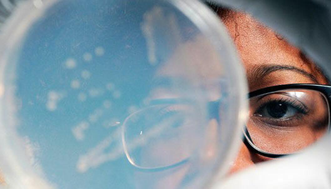 En forsker fra universitetet Georgia Tech undersøker en bakterieprøve dyrket fram av organismer funnet på 33 000 fots høyde. Gary W. Meek/Georgia Tech