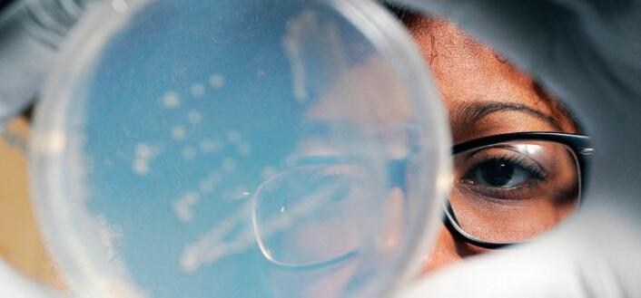 En forsker fra universitetet Georgia Tech undersøker en bakterieprøve dyrket fram av organismer funnet på 33 000 fots høyde. (Foto: Gary W. Meek/Georgia Tech)