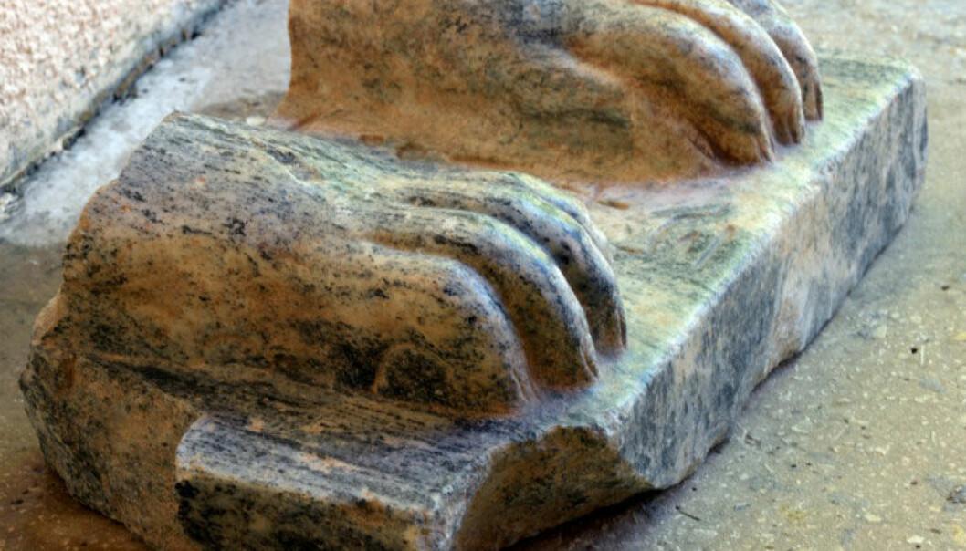 Bare deler av statuen er funnet, men inskripsjonen mellom løveføttene forteller at denne sfinksen en gang hadde hodet til kong Menkaure. Amnon Ben-Tor/Sharon Zuckerman