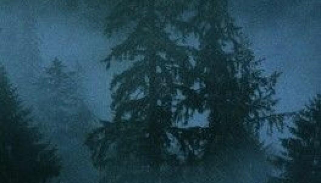 """""""Som man roper i skogen får man svar. Gjelder det samme inne i hodet også?"""""""