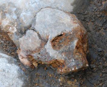 Kranium av kvinne (Foto: Fredrik Hallgren)