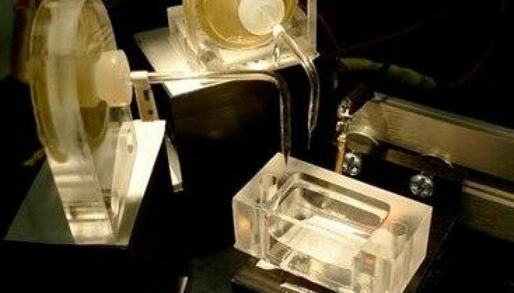3D-printer kan lage syntetisk vev