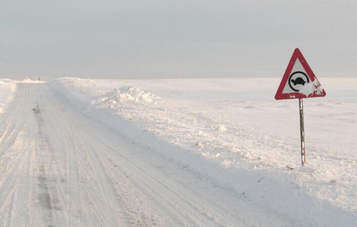 Kaldt vintervær er verken bra for skilpadder eller rekkevidden til elbiler. (Foto: (Illustrasjon: www.colourbox.no/Arnfinn Christensen, forskning.no))