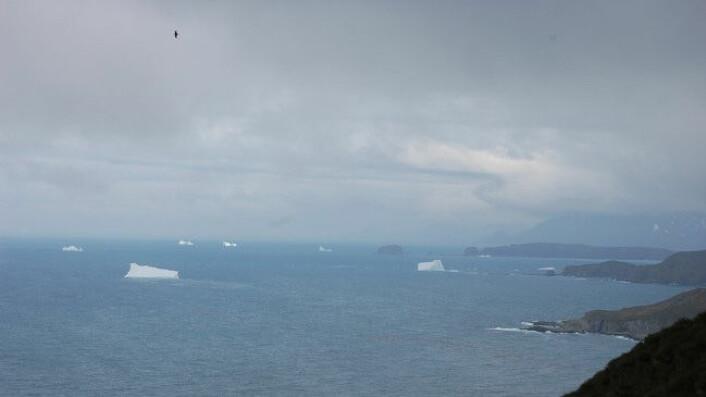 Når isen trekker seg tilbake for sommeren i Arktis, åpner det seg nye muligheter. (Foto: Jostein Bakke/UiB)