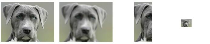 Folk reagerte mindre på de redigerte hundebildene