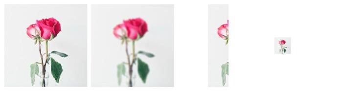 De redigerte blomstebildene ble også vurdert dårligere enn orginalbilde