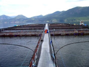 Arbeidsplasser på havet. Lakseoppdrettsanlegg på kysten av British Columbia. Foto: Camilla Brattland. NIKU.