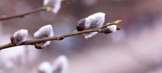 Er en varm vinter farlig for trea?