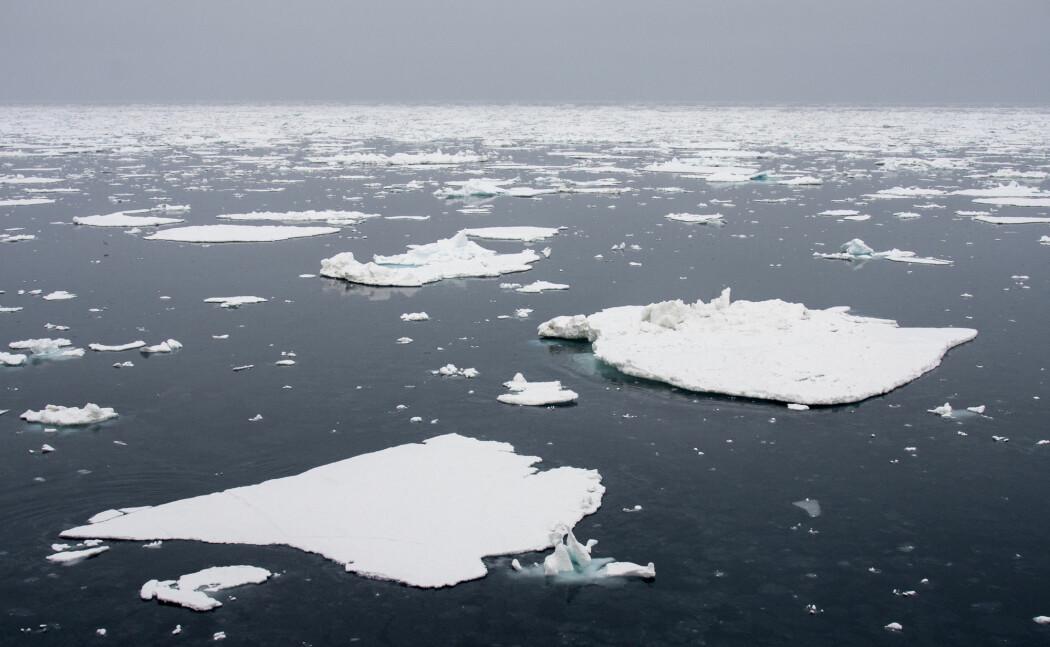 Havis fotografert utenfor Svalbard. Iskanten i Barentshavet har de siste årene trukket sørover, på grunn av naturlig svingninger i temperaturen, melder Havforskningsinstituttet. Det store bildet er at havområdet blir varmere.