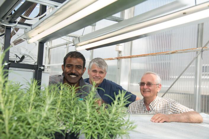 Dr. Aruppillai Suthaparan (UMB), professor og faglig prosjektleder Arne Stensvand (Bioforsk) og professor Hans Ragnar Gislerød (UMB) (Foto: Erling Fløistad)